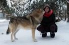 Москвичка продала квартиру, чтобы открыть первый в России приют для волков