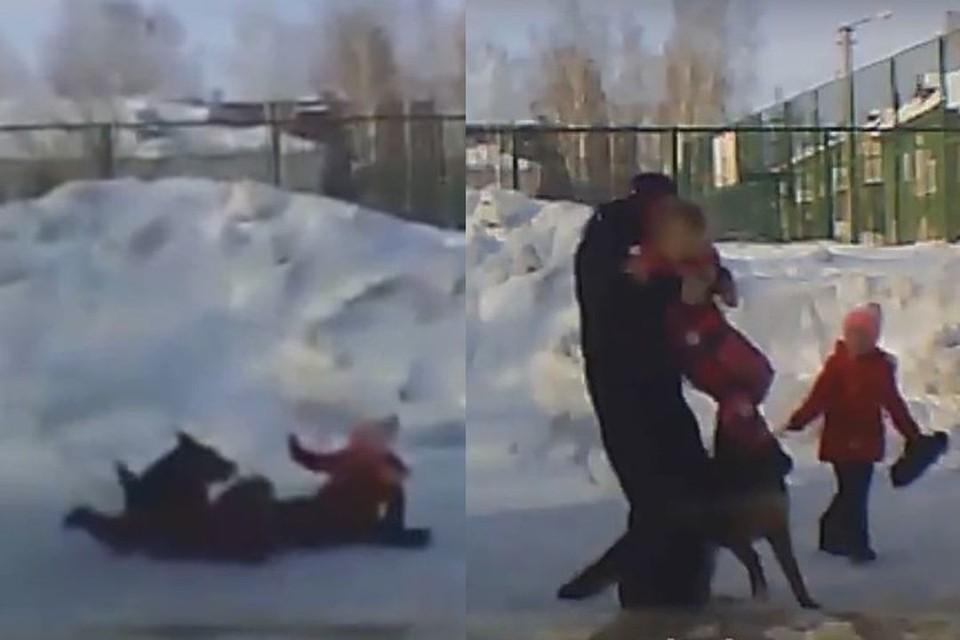 В Новосибирске собака напала на двух школьниц. Фото: Кадр из видео