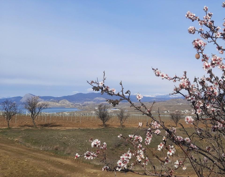 В Крыму весной очень красиво. фото: Богдан Погадаев