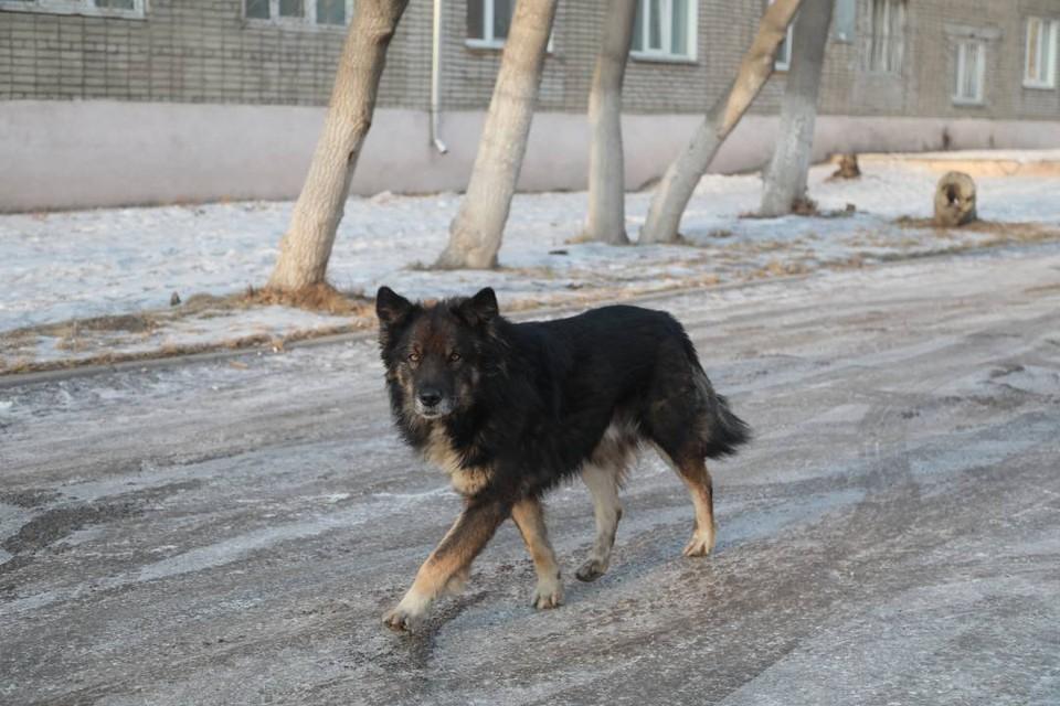 Названы районы Иркутска, в которых больше всего бродячих собак