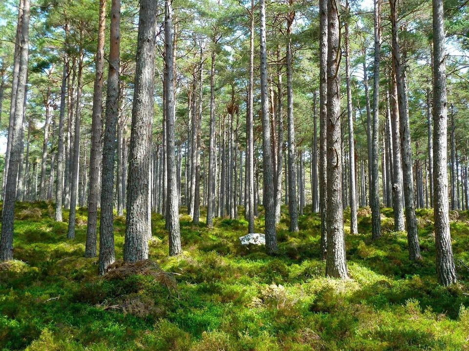 Удмуртия вошла в десятку лучших регионов по искусственному лесовосстановлению