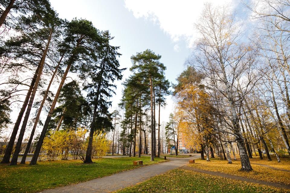 На подготовку проекта реконструкции парка «Берёзовая роща» в Ижевске выделят 8 миллионов рублей