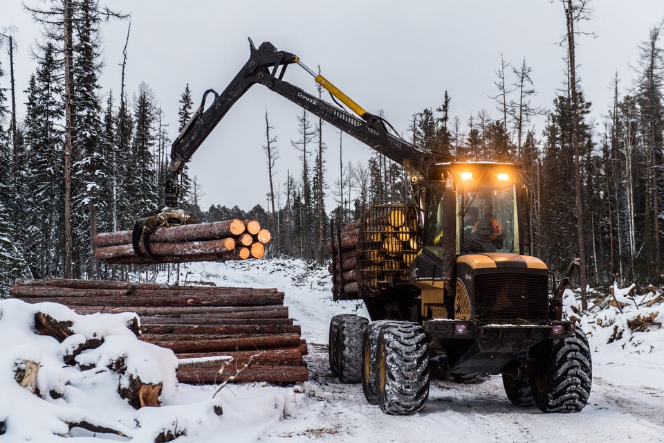 Рабочие успели спилить около двухсот деревьев.