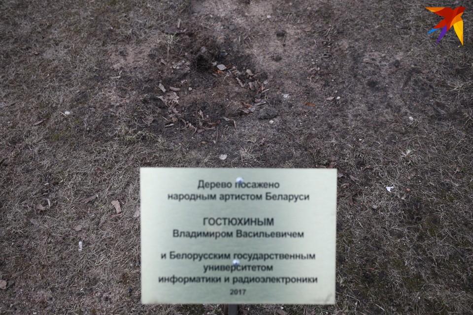 На месте, где росло дерево, осталась только памятная табличка