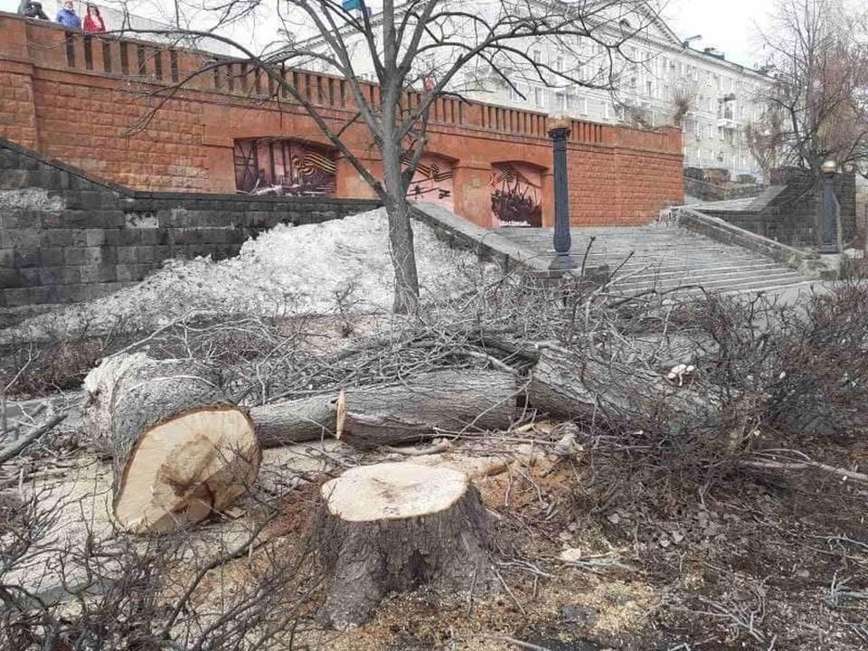 На фото - спиленные 1 апреля деревья на Набережной