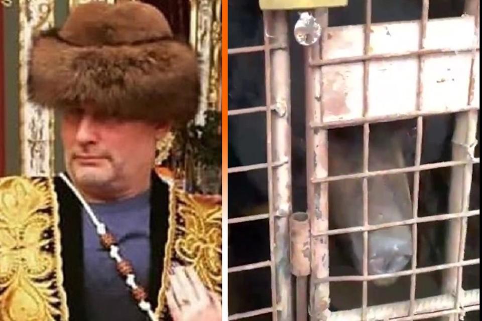 Медведей из личного зоопарка Барданова переправили в Тульскую область.