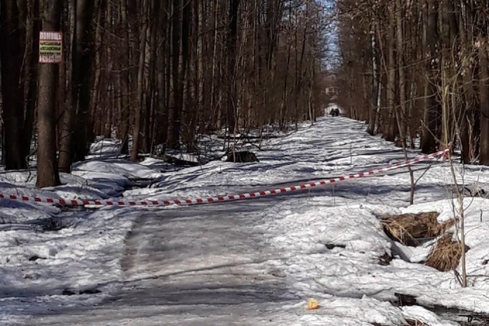 В Брянске нашли мать убитого младенца, обугленное тело которого нашли в лесу «Заставище».