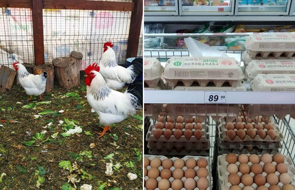 Домашние яйца вроде бы должны стоить меньше фабричных, но, как оказалось, все не так просто.