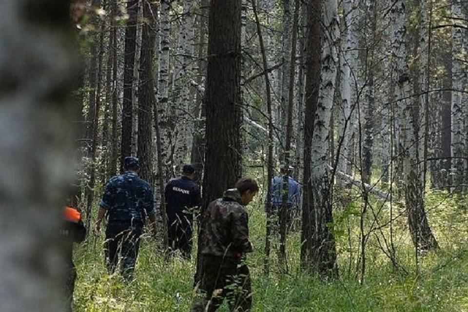 Следить за ситуацией в лесах будут, в том числе, и из космоса.
