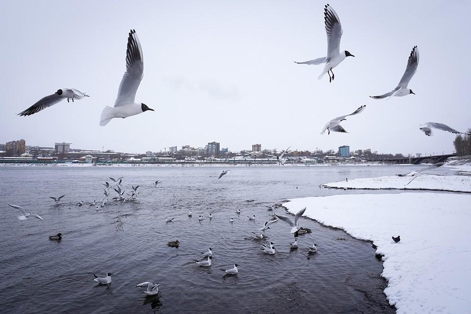 Холодно и зябко: 10 красивых фото апрельского снегопада в Иркутске.
