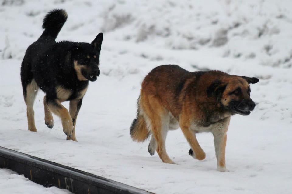 Бездомных животных сосчитают в Иркутской области.