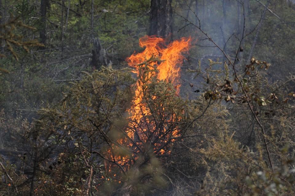 Особый противопожарный режим введут в Иркутской области с 1 мая