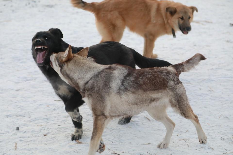 Все случаи связаны с дикими животными