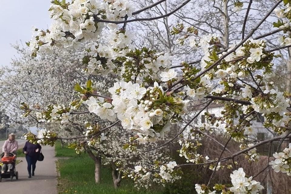 Солнечных дней в Анапе на майские праздники будет больше