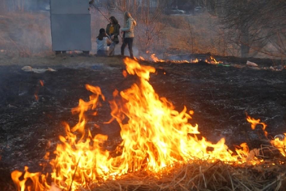 В Новосибирской области будет действовать особый противопожарный режим.