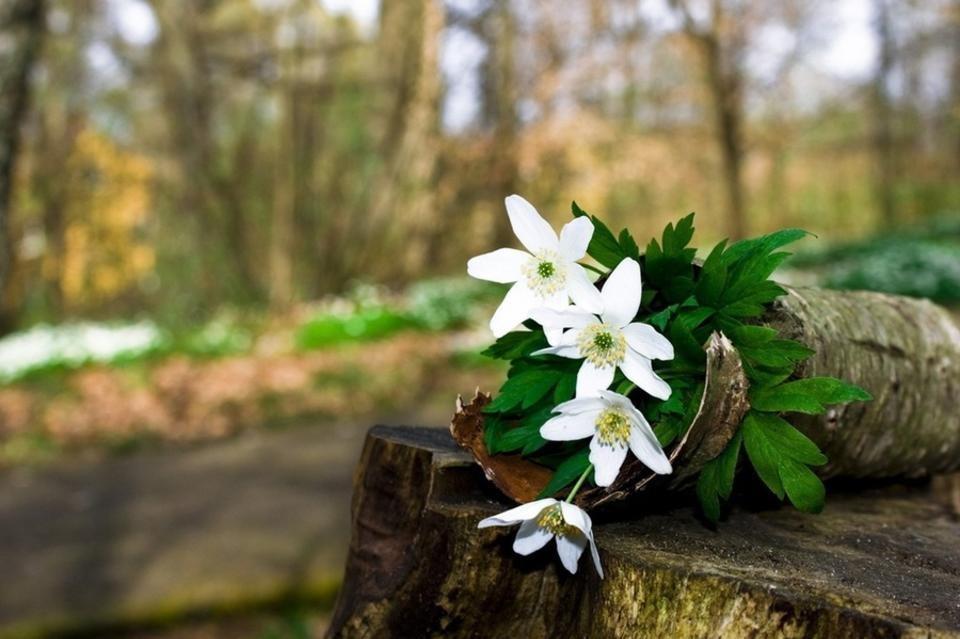 Весна вступает в свои права. Фото: соцсети