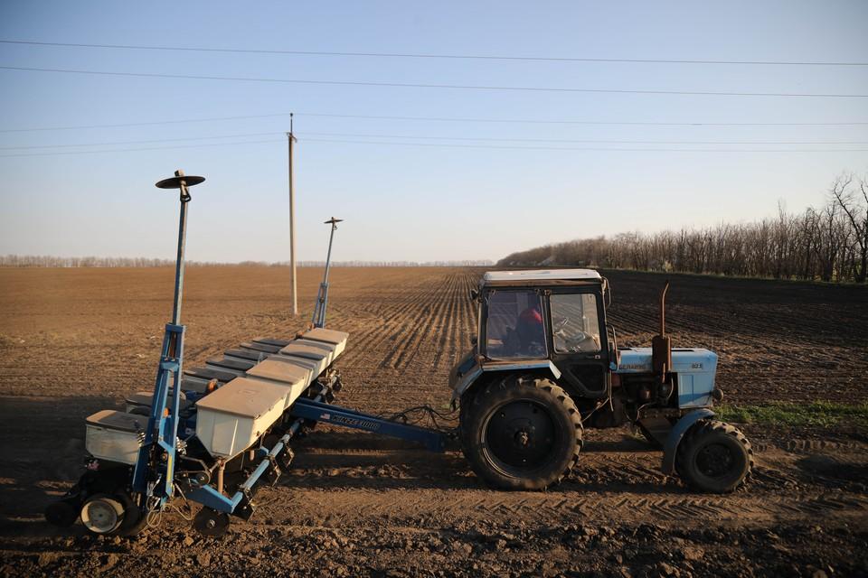 Подсолнечник занял 52 тысячи гектаров. В ближайшее время в регионе приступят к севу сои.