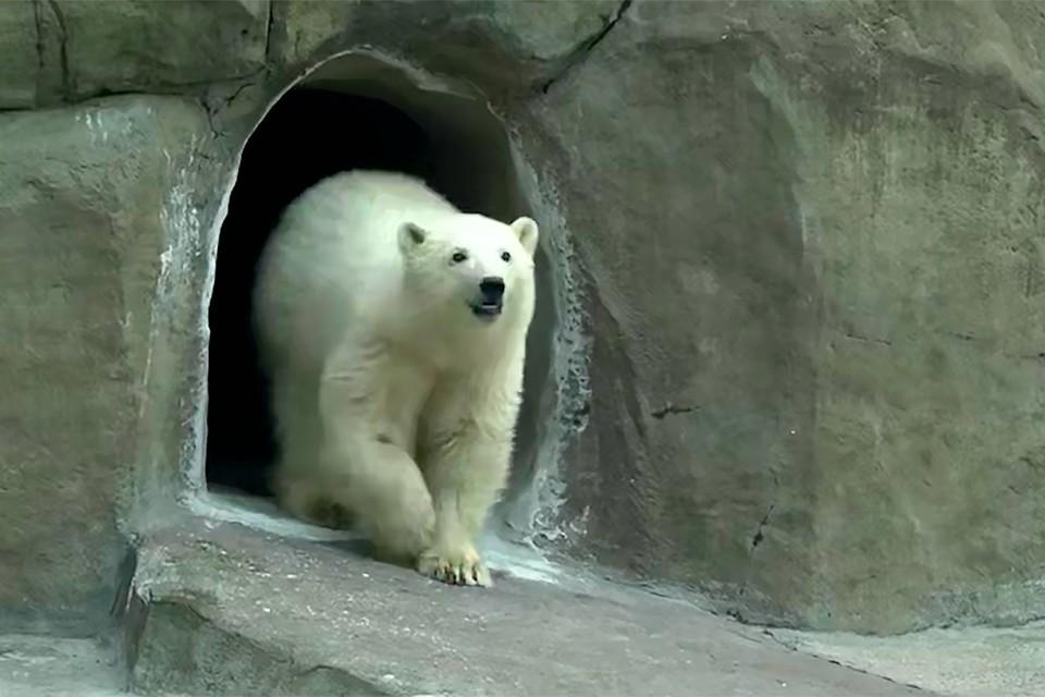 В будущем медведицу адаптируют к наружную вольеру