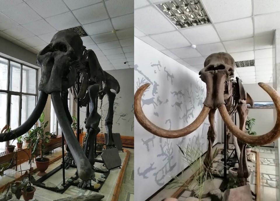 Гигантские скелеты достигают высоты в 5 метров. Фото: Андрея Кузьмина из группы «Музей археологии и этнографии в Академгородке» «ВКонтакте»