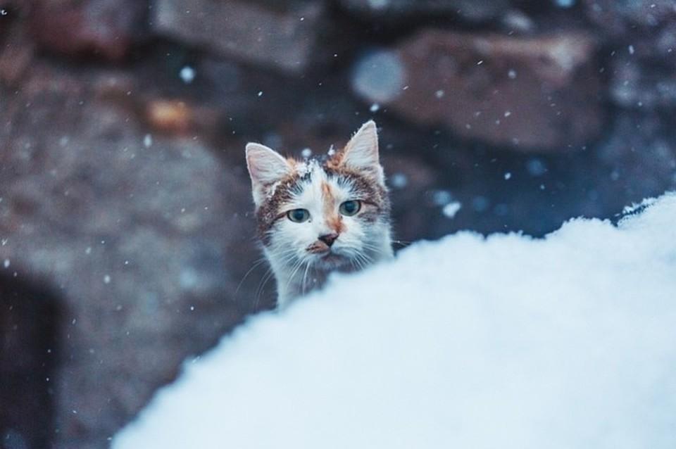Небольшой дождь и мокрый снег ждет жителей Югры