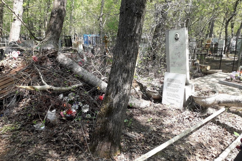 Спиленные деревья и мешки мусора брошены прямо на могилы