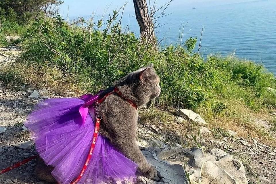 Дымка выбралась к морю на выходные. Фото: https://www.instagram.com/my_grey__cat2020/