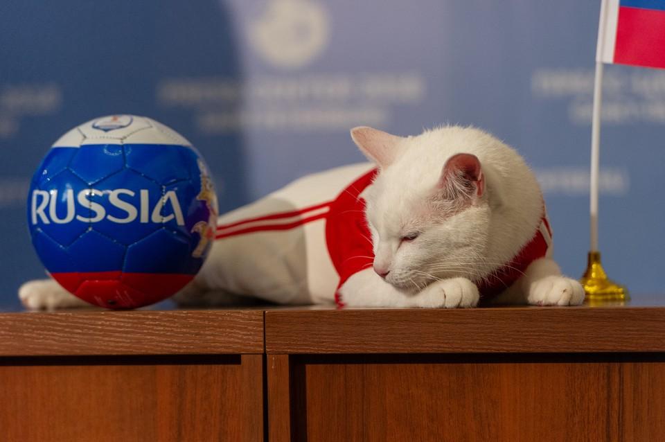 """Кот Ахилл вновь будет """"работать"""" предсказателем. Теперь на Евро-2020."""
