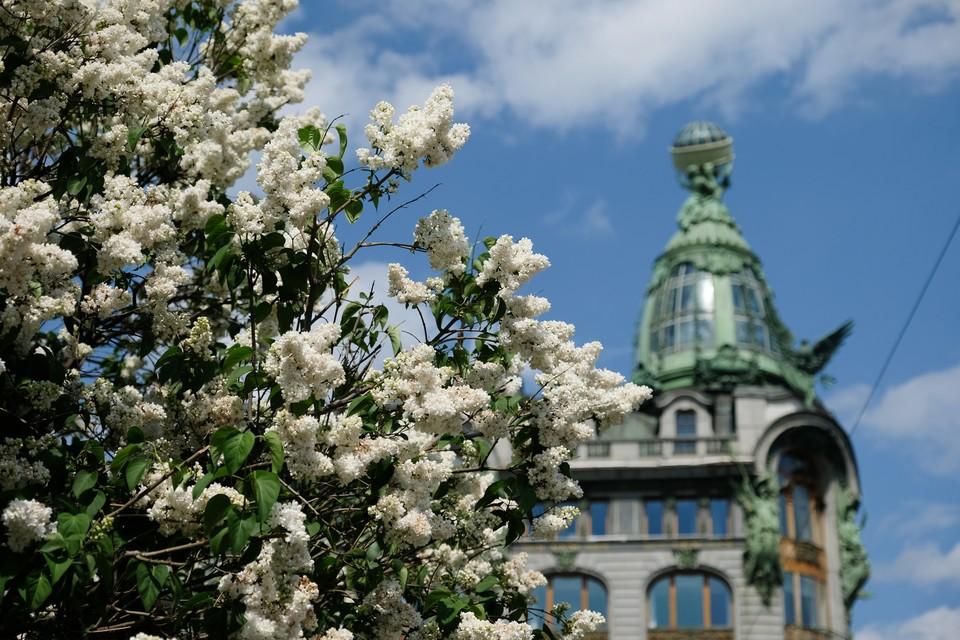 Прохлада и дожди ожидают Петербург 28 мая