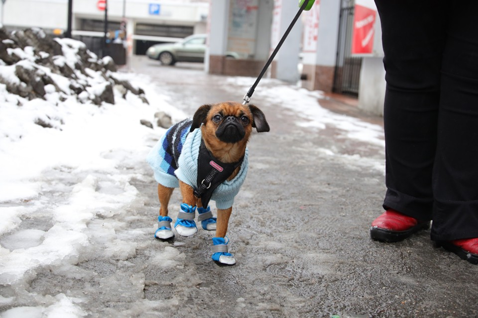 Официально в городе выделено 48 мест для выгула собак, но все они находятся в ужаснейшем состоянии.