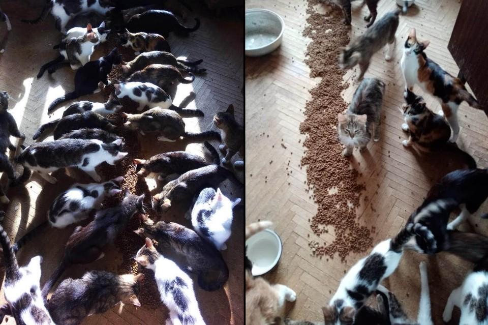 """В Петербурге парень на время приютил 30 кошек и теперь не знает, что с ними делать. Фото: Павел Пингарев / """"Петроградская диаспора"""" в Facebook"""