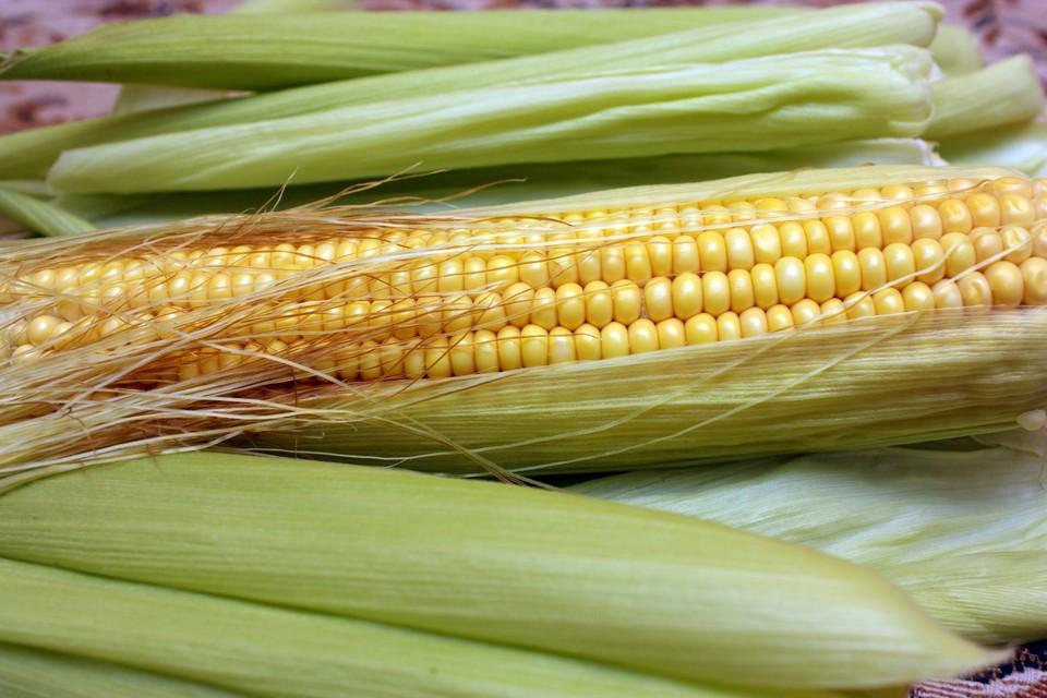 Кукуруза на зерно и гречиха засеяны на 98 и 80 процентов соответственно.