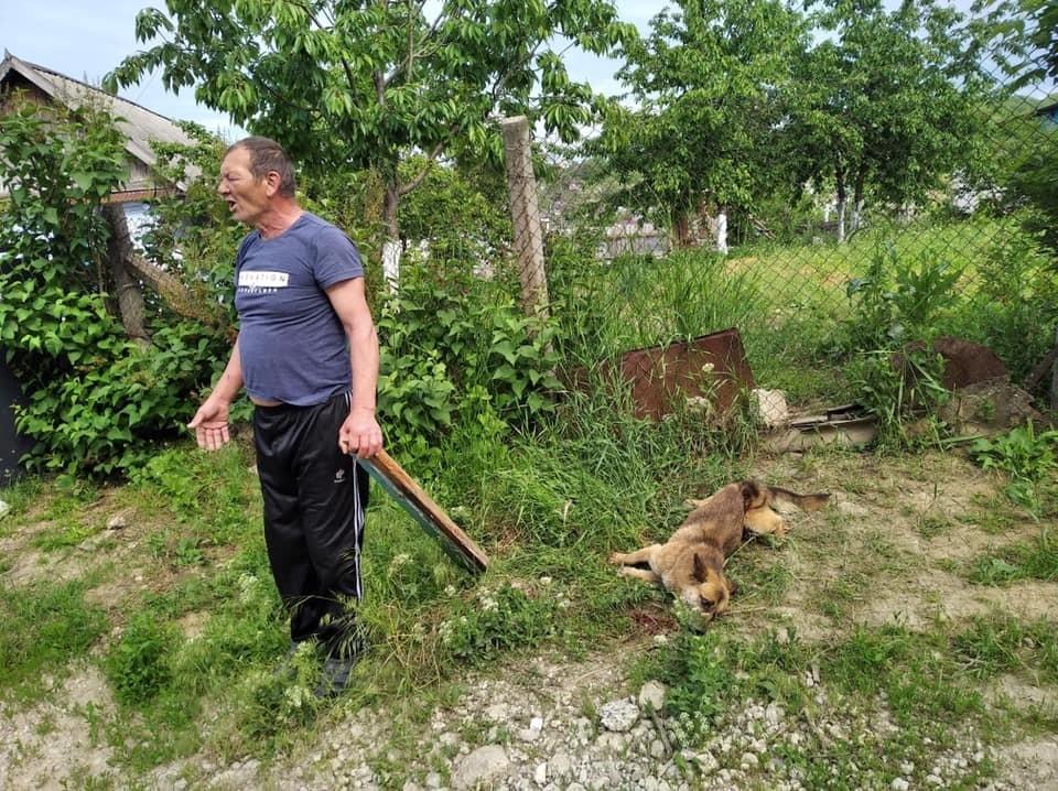 Мужчина просто убивал собаку (Фото: соцсети).