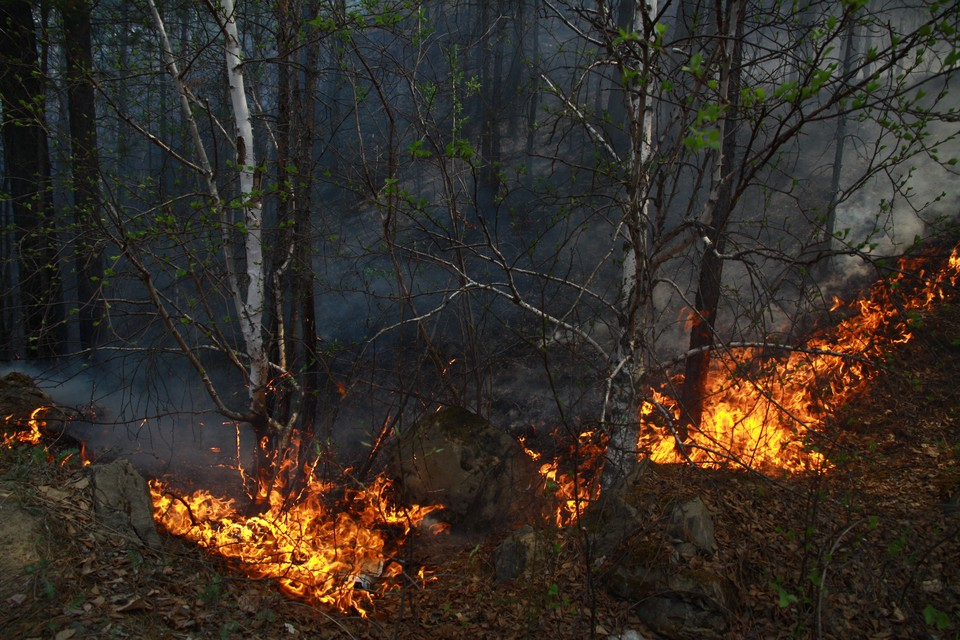 На жителя Бодайбо, который сжег 43 гектара леса, заведено уголовное дело