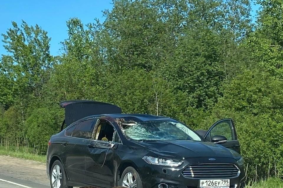 Под Петербургом иномарка разорвала пополам несчастного лося. Фото: vk.com/spb_today