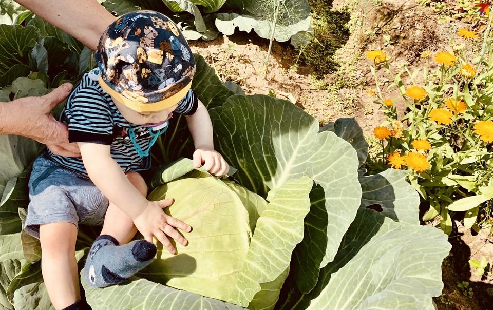 В Тверской области поднялись цены на капусту.