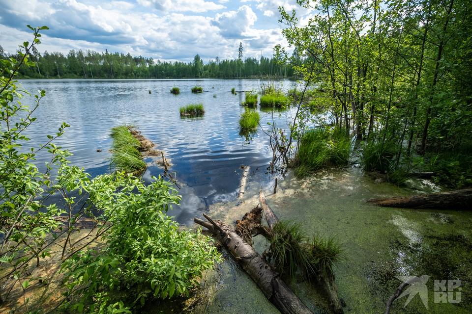 Губернатор Николай Любимов уверен, что Рязанскую землю можно сделать еще комфортнее для людей и каждого обитателя наших лесов, степей, озер, болот и рек.