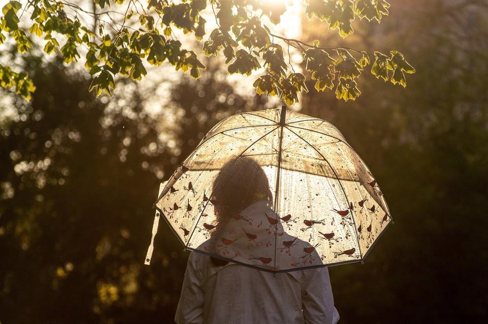 Солнце будет показываться редко Фото: pixabay.com
