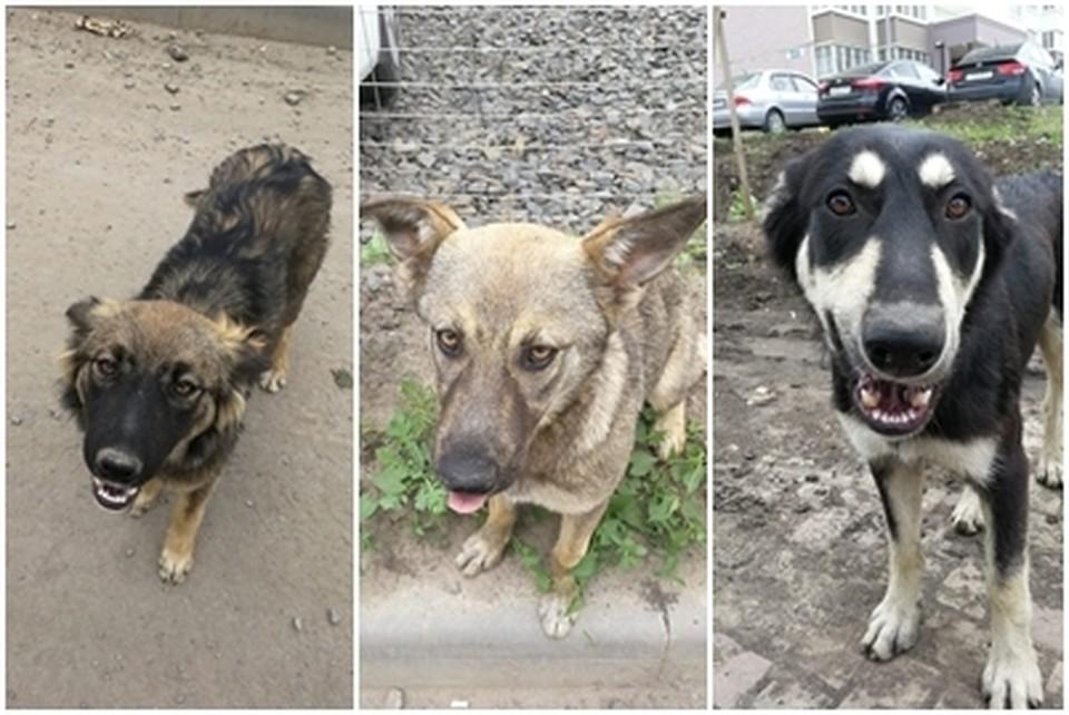 Всех собак стерилизовали и обработали от паразитов. Фото: личный архив волонтера