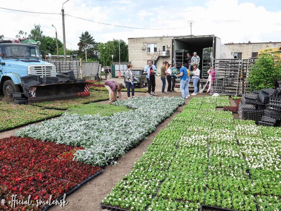 80 тысяч цветов высадят в парках и на улицах в Смоленске. Фото: администрация г. Смоленска.