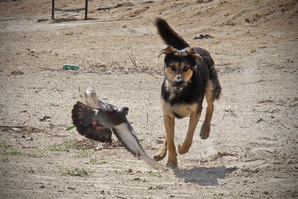 Мужчина грозился спустить собаку на участкового.