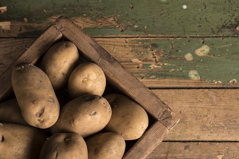 Россия решила закупить в Беларуси старую картошку - своей не хватило и цены растут. Фото: pixabay.com.