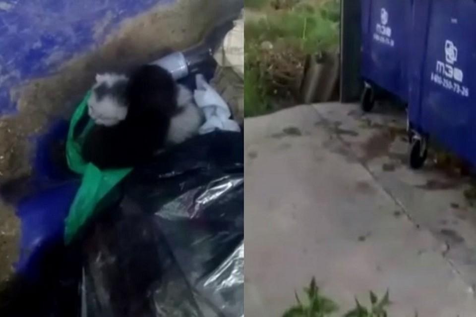В Тюмени маленьких котят, которых выкинули в мусорку, чуть не отправили под пресс. Скриншот из видео.