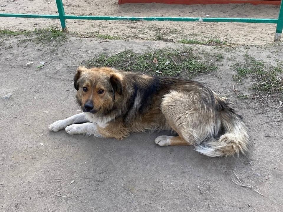 Скоро в Саратове откроют новый приют для бездомных животных