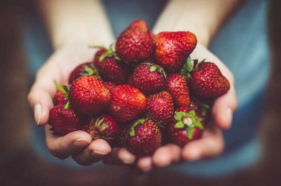 Из-за частых дождей ягоды начинаются портиться будучи еще не убранными. Фото: соцсети