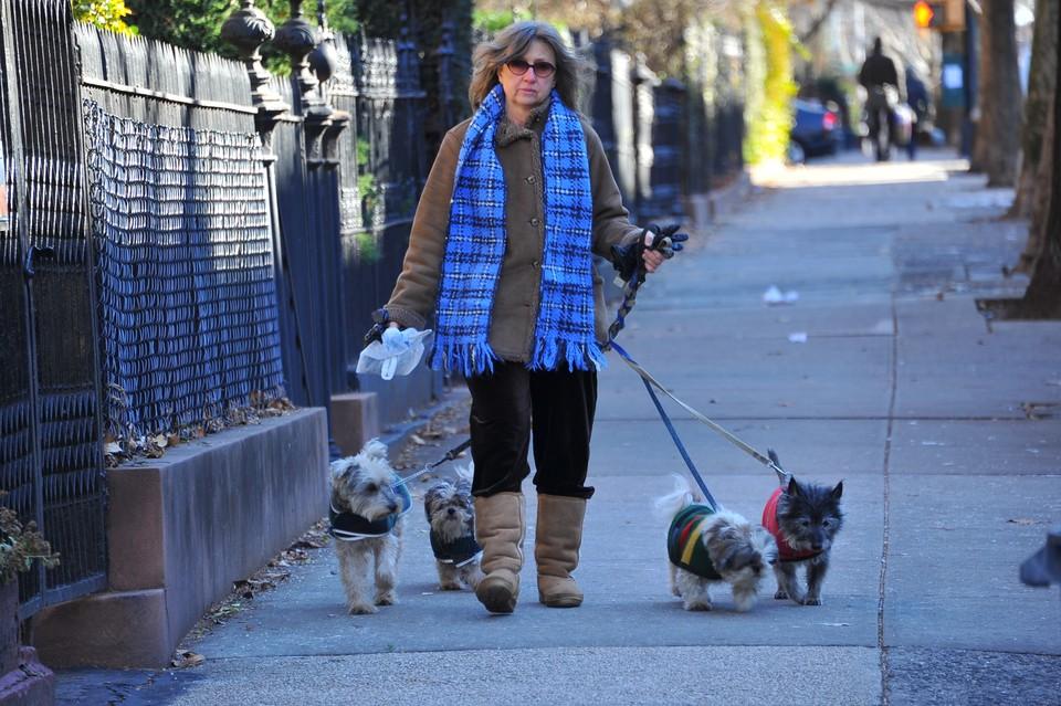 В Госдуму внесен закон о допустимом количестве домашних животных в квартире