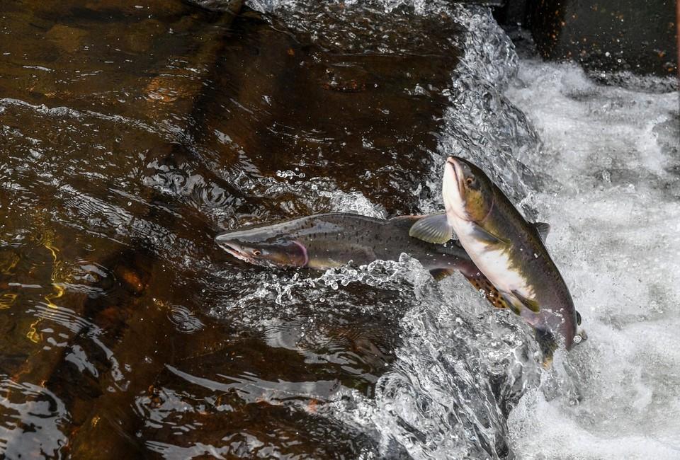 Требования к сетям прописаны в правилах рыболовства