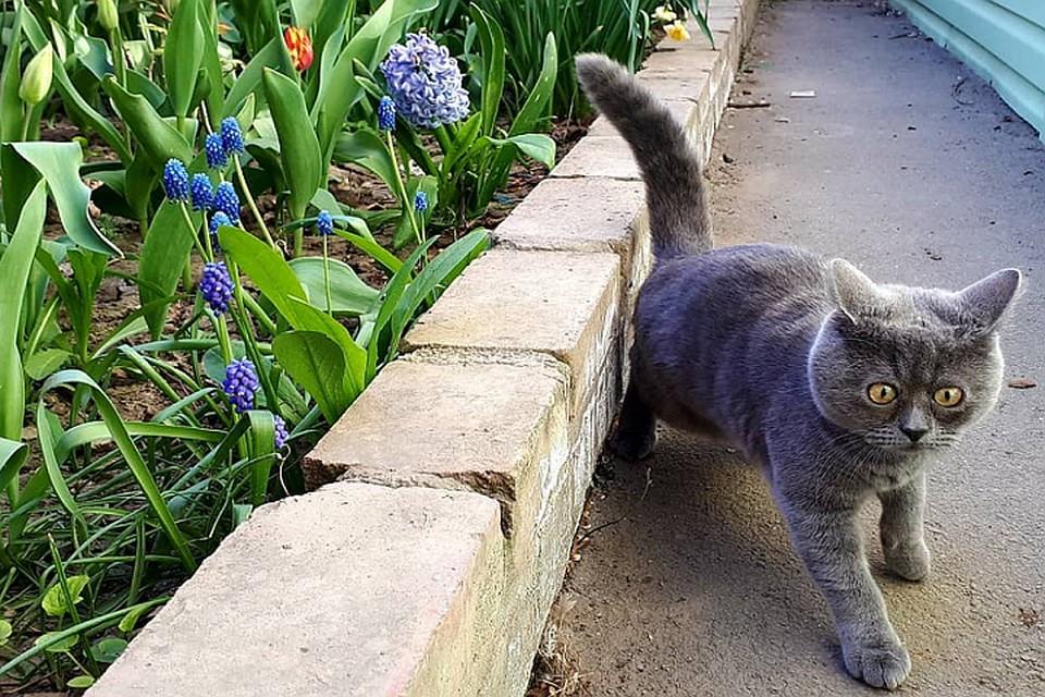 На Федю обрушились море лайков и оглушительная слава Фото: Instagram кота Феди