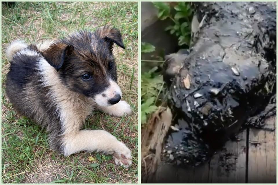 """В Якутии собака привела людей к щенку, гибнущему в яме с битумом. Фото: Василий Крымков, """"Белый Бим""""."""