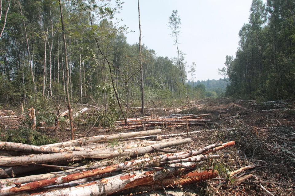 Администрация города обратила внимание, что в этом году запланирована большая массовая высадка деревьев в целом по городу. Фото: Людмила Баркова