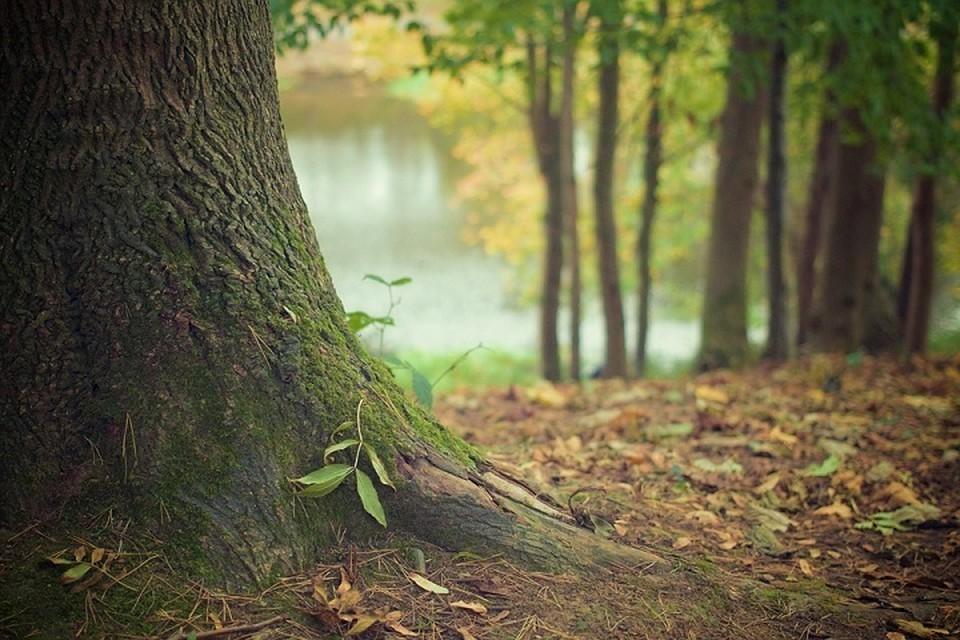 Из-за жары белорусам снова запретили ходить в лес. Фото: pixabay.com